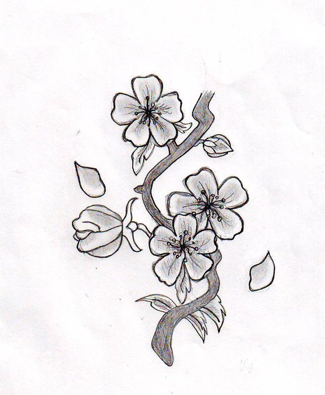 Drawn sakura blossom orange blossom flower Drawing Flower Blossom more Flowers