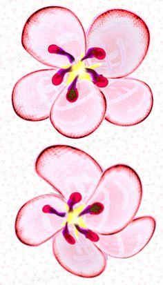 Blossom clipart bloom Vector bloom blossom artwork Cherry