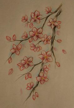 Drawn sakura blossom orange blossom flower Blossom Cherry · una of