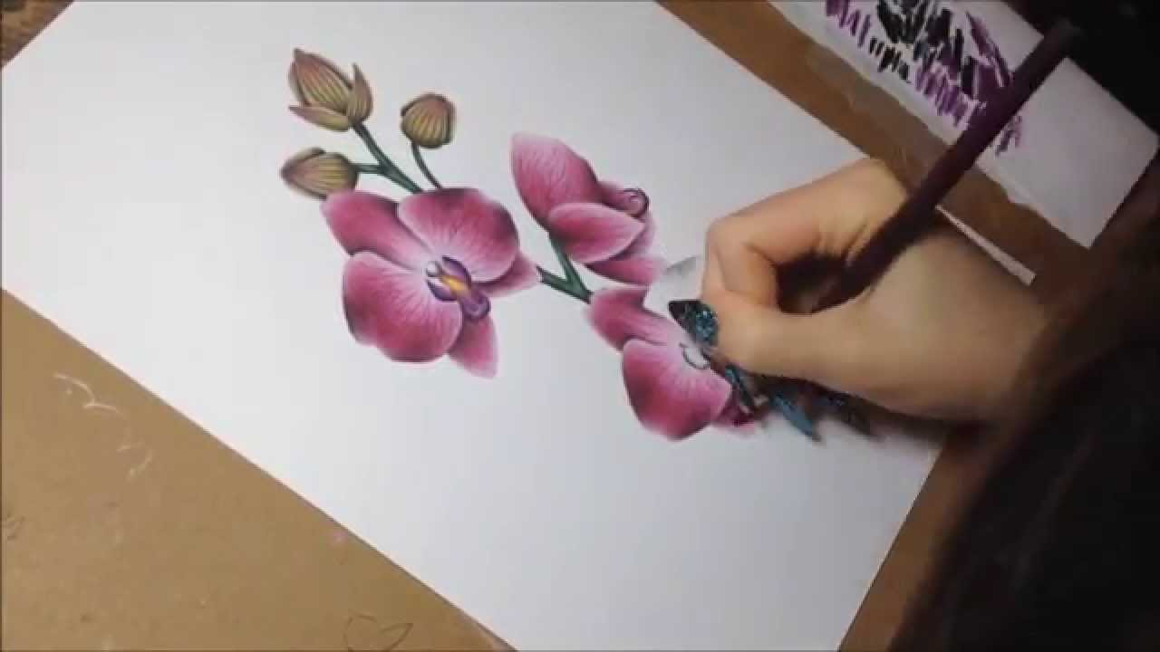 Drawn sakura blossom orchid tree  with orchids orchids (speeddrawing