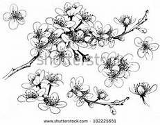 Drawn sakura blossom peach blossom Results result  tattoos Line