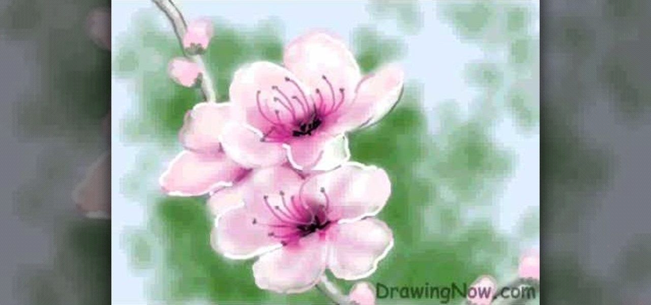 Drawn sakura blossom peach blossom « & to  ::