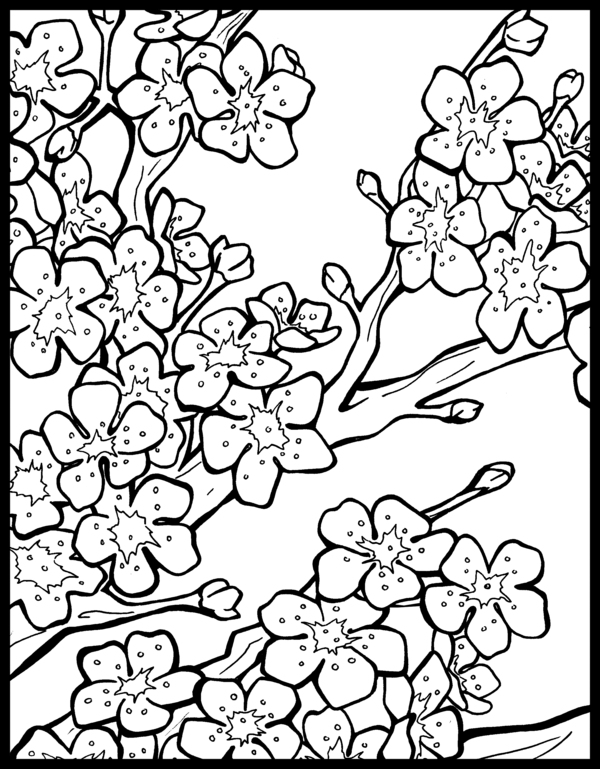 Drawn sakura blossom peach blossom Blossom Download coloring Sakura Blossom
