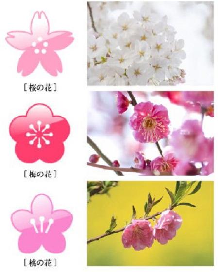 Drawn sakura blossom peach blossom Of the most of a