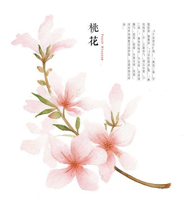 Drawn sakura blossom peach blossom Photos GaloShining DeviantArt Prunus on