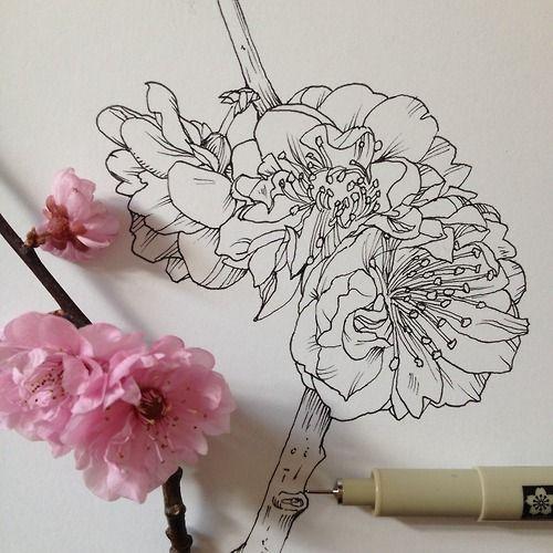 Drawn sakura blossom pen Images 53 best Find Illustration