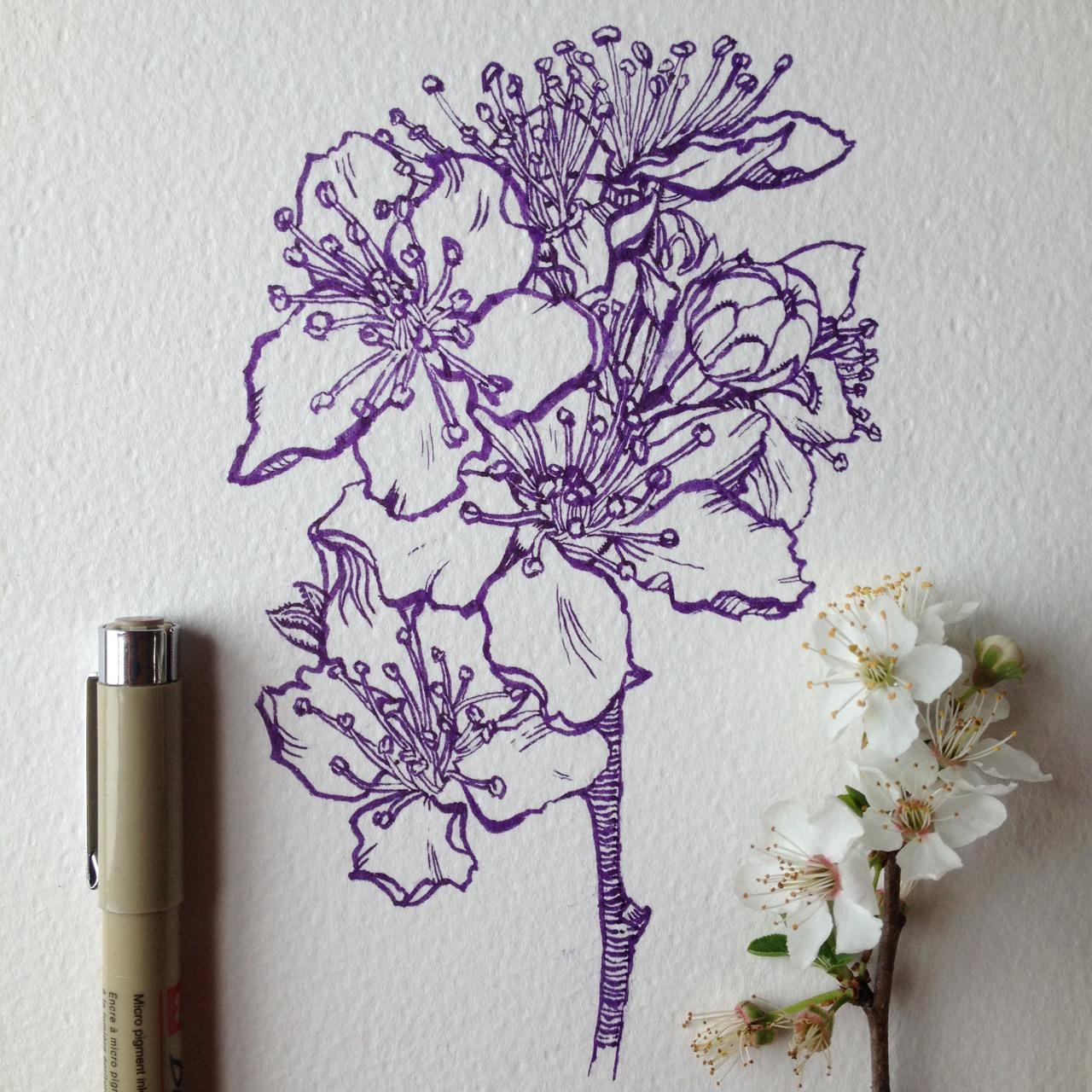 Drawn sakura blossom pen Best cherry sketch pen Find
