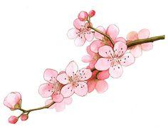 Drawn sakura blossom pen Painting  수채화꽃 Floral Spring