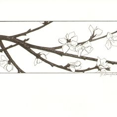 Drawn sakura blossom pen And pen by ink Pen