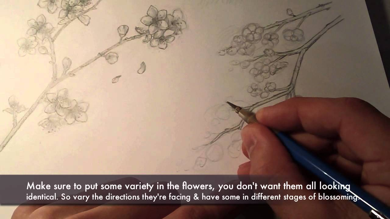 Drawn sakura blossom pencil drawing ~Cherry Blossoms~ YouTube to How