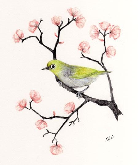 Drawn sakura blossom pencil drawing Cherry drawing pencil Butterfly pencil