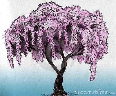 Drawn sakura blossom pencil drawing Drawing best apple tree) sketch