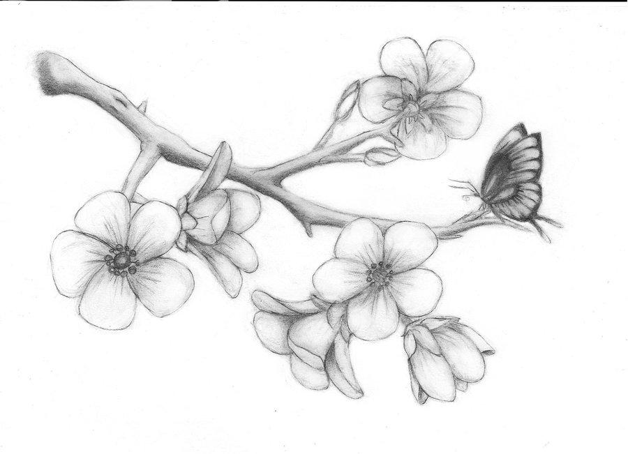 Drawn sakura blossom pencil drawing Cherry Google branch Google blossom