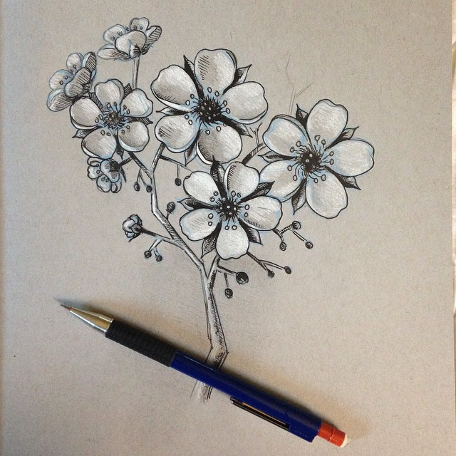 Drawn sakura blossom pencil drawing Of the Pencil Trying learn