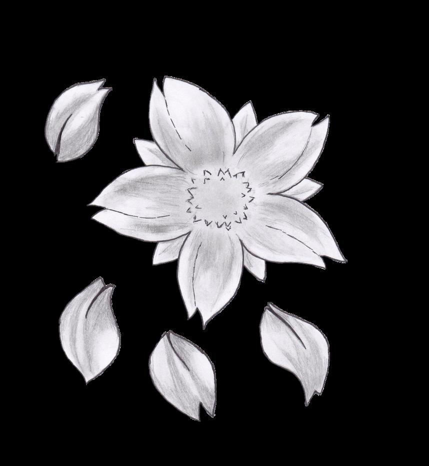 Drawn sakura blossom pencil drawing Flower image Flower Pencil Pencil