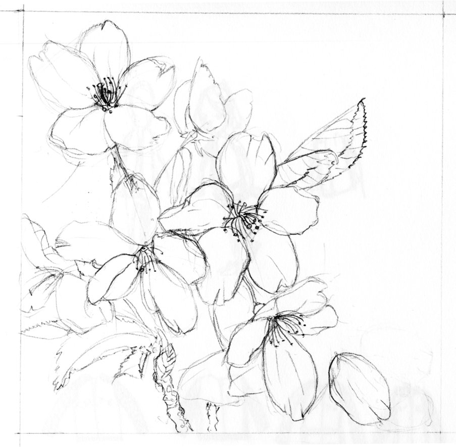 Drawn sakura blossom pencil step by step On by Cherry by Blossoms
