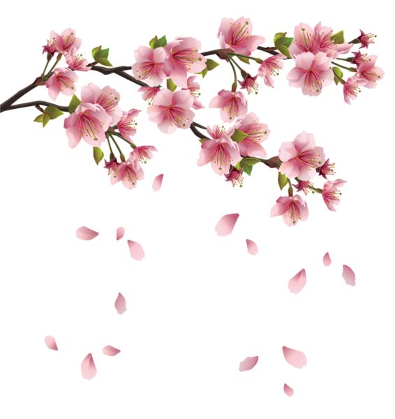 Pink Flower clipart japanese cherry blossom Cherry Petals Falling vector Branch