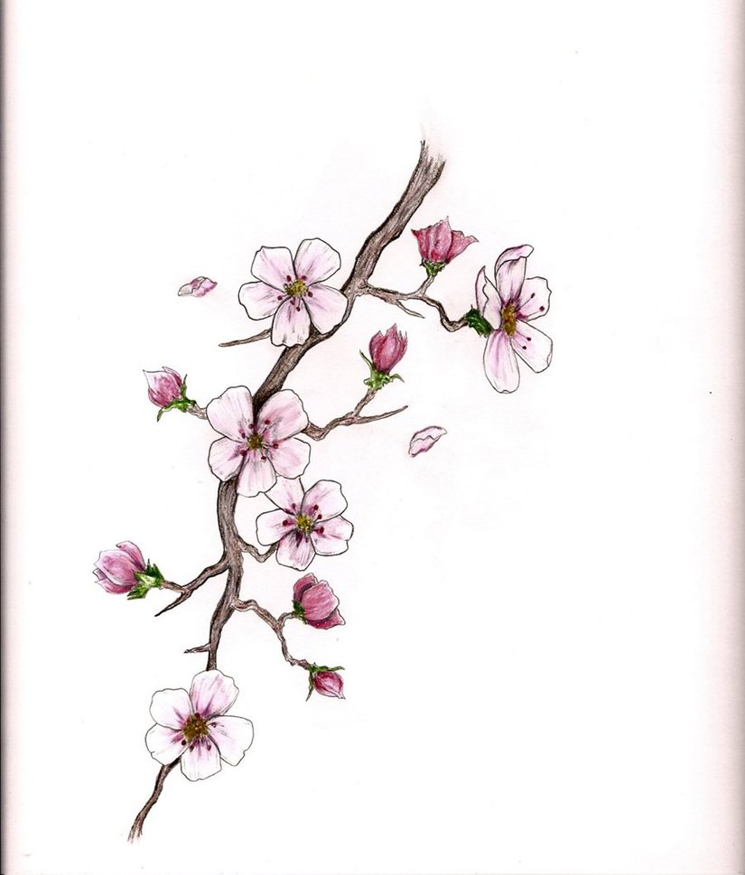 Drawn sakura blossom pinter Blossoms Cherry of blossoms Blossoms