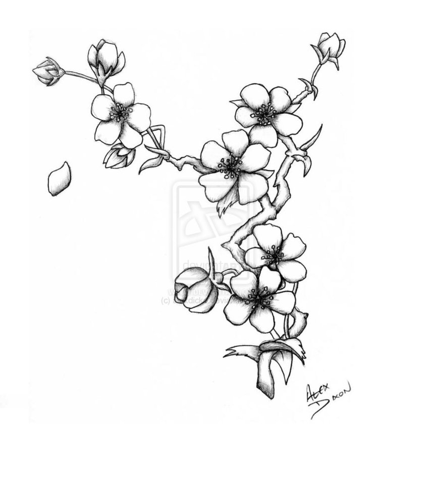 Drawn sakura blossom pinter Deviantart http://th00 http://th00  DrawingBlossom