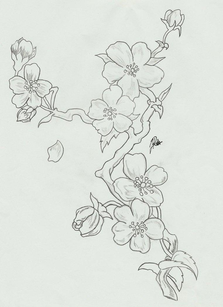 Drawn sakura blossom pinter And black designs and black