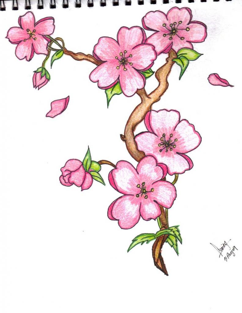Drawn sakura blossom pinter Sakura  Line Painting Cherries