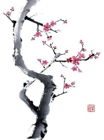 Drawn sakura blossom plum blossom On plum especially cherry blossoms