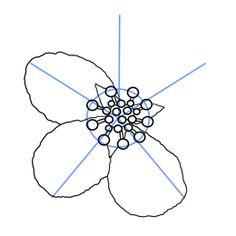 Drawn sakura blossom real Ideas to how Cherry Cherry