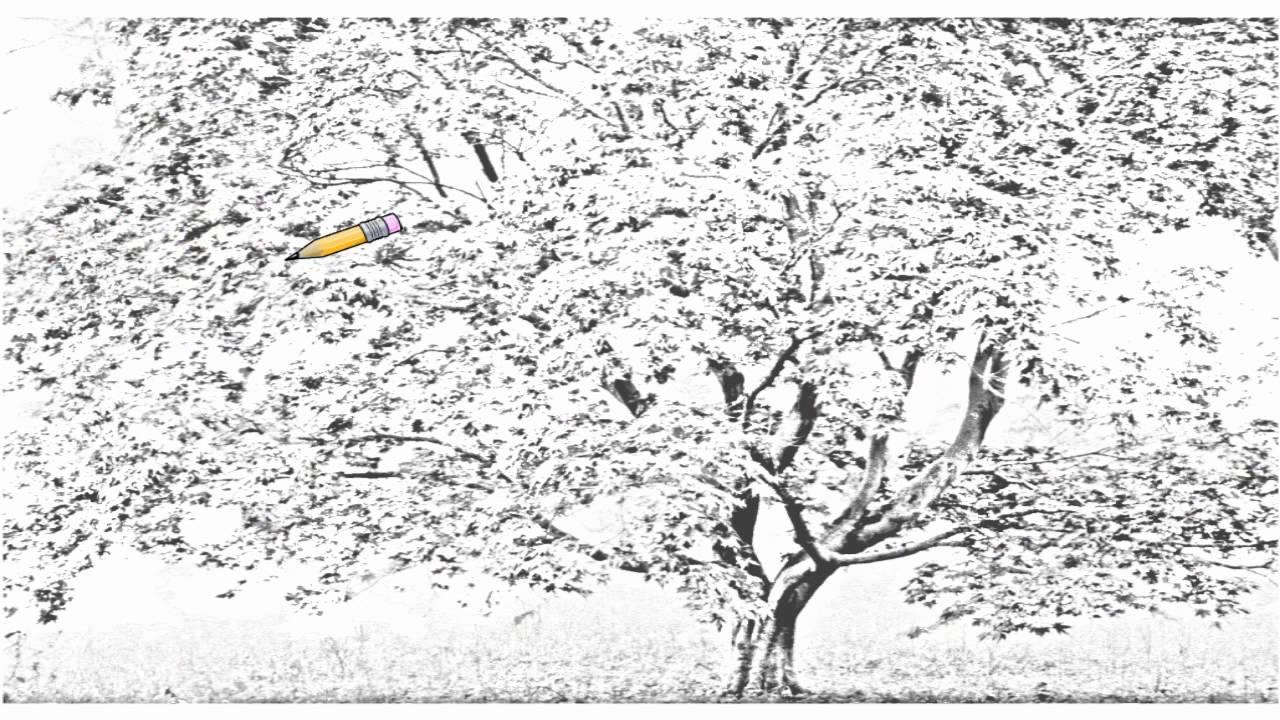 Drawn sakura blossom real Draw Tree Cherry Blossom Auto