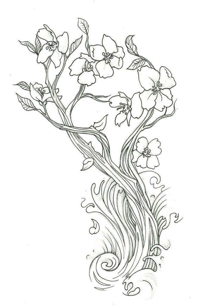 Drawn sakura blossom real Cherry Cute Drawing Coloring Cherry