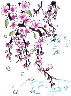 Drawn sakura blossom real Blossoms about best draw flowers