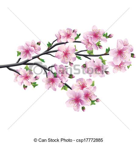 Sakura clipart japanese cherry blossom #4
