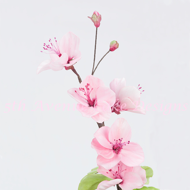 Drawn sakura blossom realistic How paste Cherry learn blossom