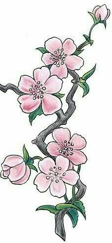 Drawn sakura blossom realistic This on http://1 Find art