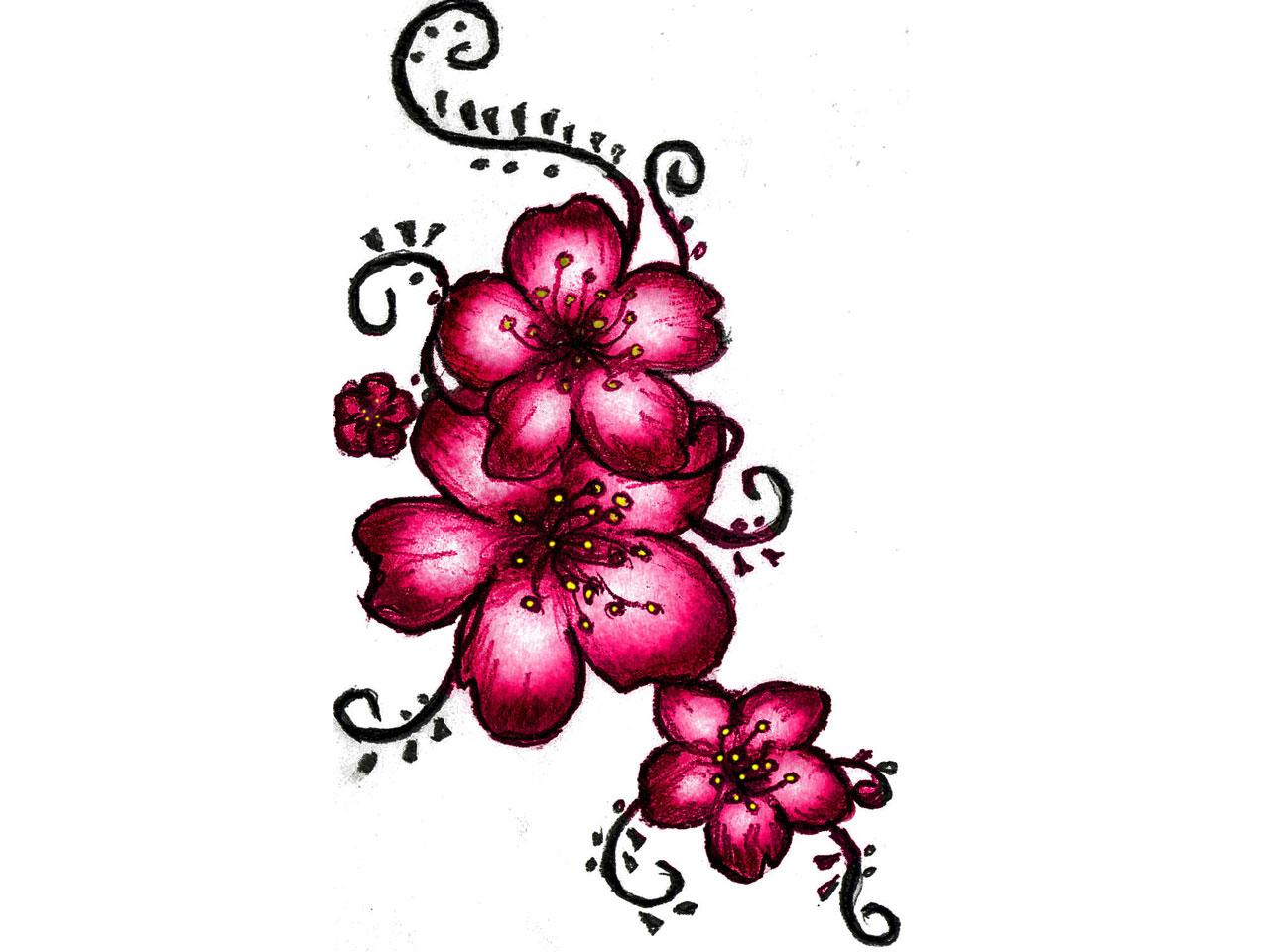 Drawn sakura blossom red Blossom drawing blossom love I