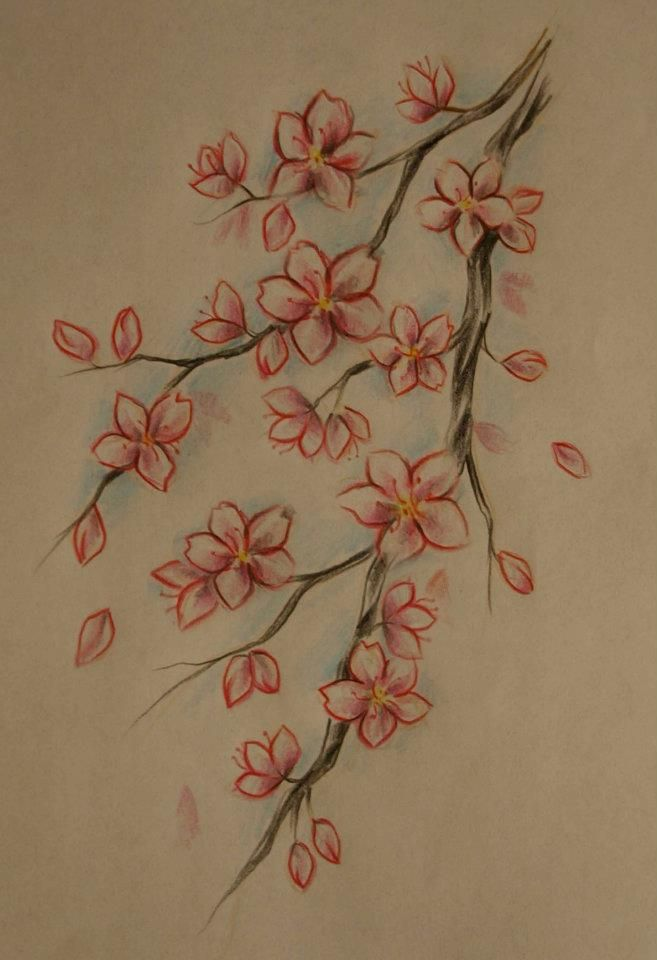 Drawn sakura blossom rose tree Images cherry blossom colorful tattoo