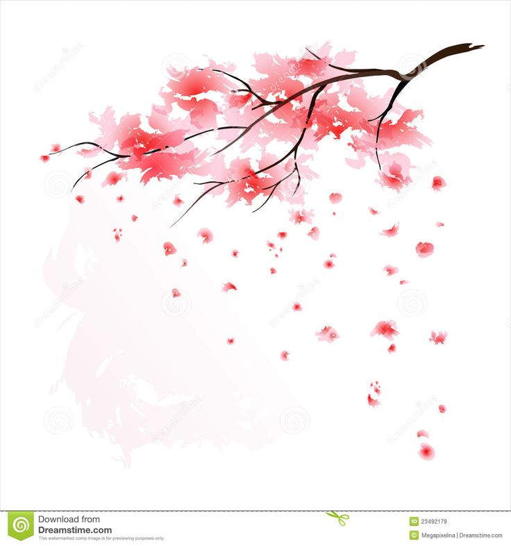 Drawn sakura blossom sakura bloom Cherry flying tree Japanese Japanese