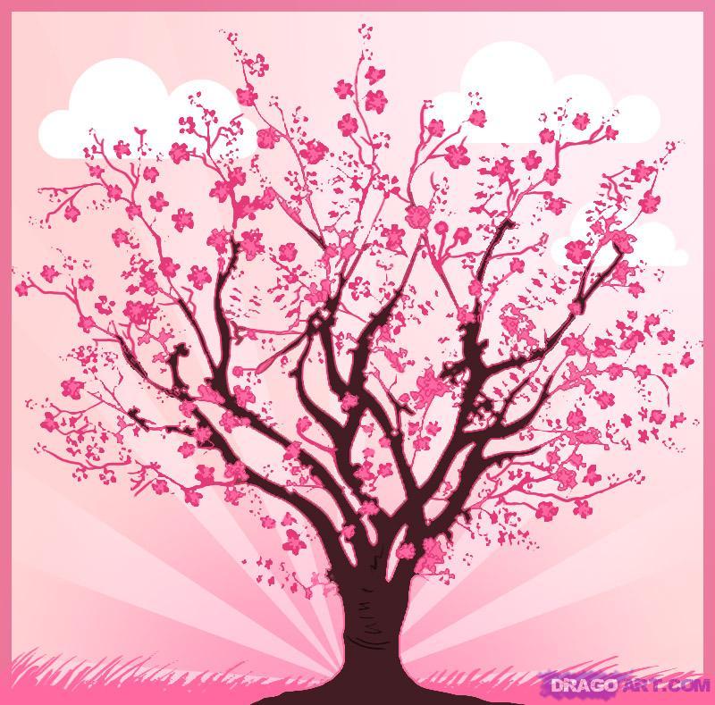 Drawn tree cherry blossom tree Cherry to Tree tree draw