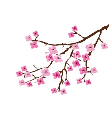 Drawn sakura blossom sakura tree Cherry Cherry on VectorStock VectorStock