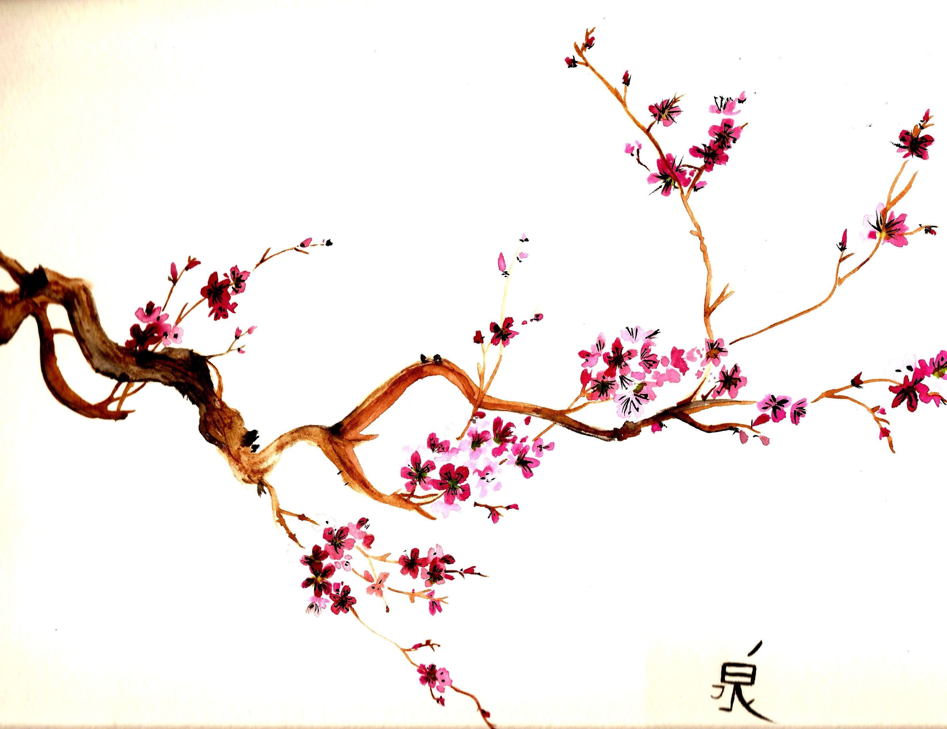 Drawn sakura blossom sakura tree #watercolor #Cherry #blossom #watercolor My