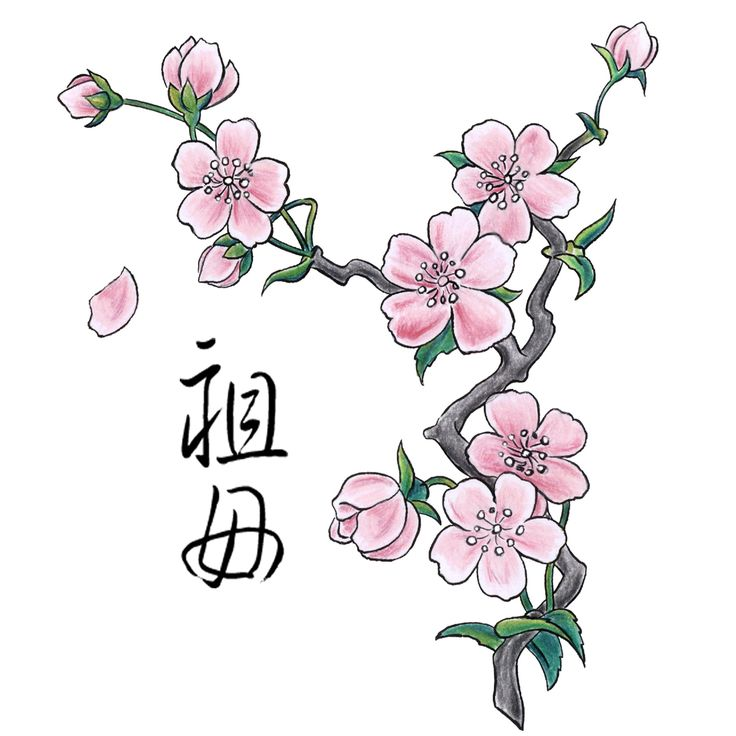 Drawn sakura blossom simple Blossom drawing/ No on Pinterest