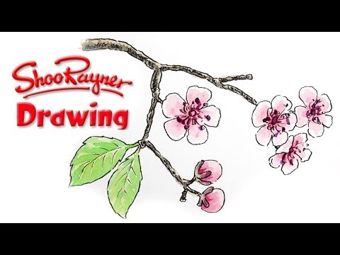Drawn sakura blossom single Cherry How  draw to
