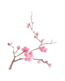 Drawn sakura blossom single Blossoms Cherry Sakura