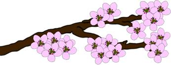 Drawn sakura blossom single Drawing Blossom to : Draw