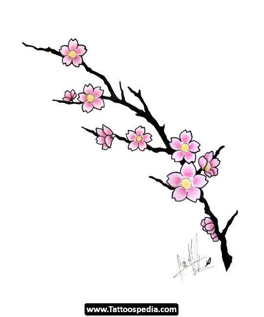 Drawn sakura blossom single Jpg Cherry planning best on