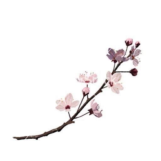 Drawn sakura blossom single Sakura zoeken Pinterest Google best