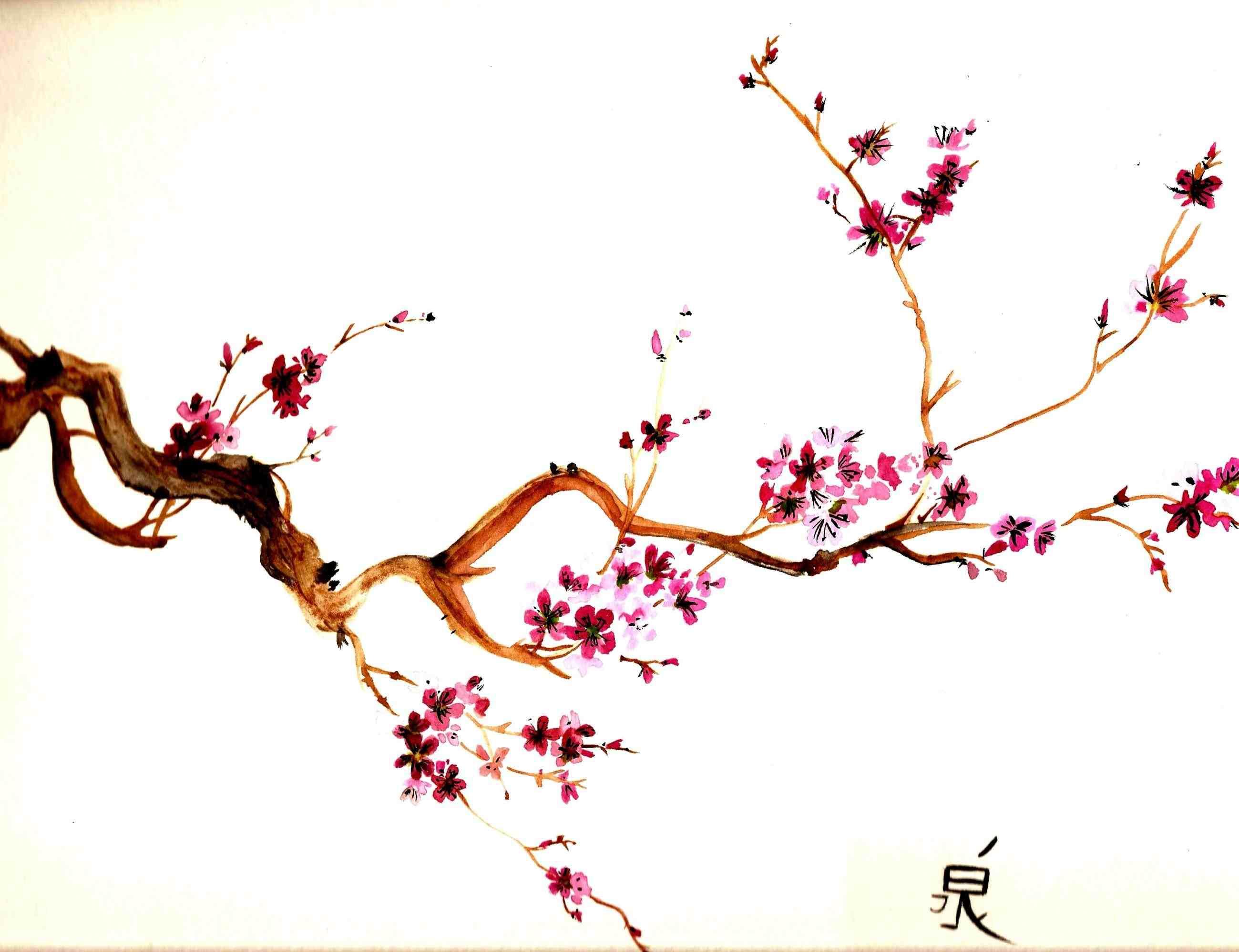 Drawn sakura blossom single Drawing single online Download blossom