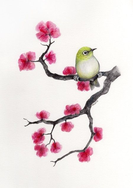 Drawn sakura blossom sketch Original blossom Cherry Silver Eye