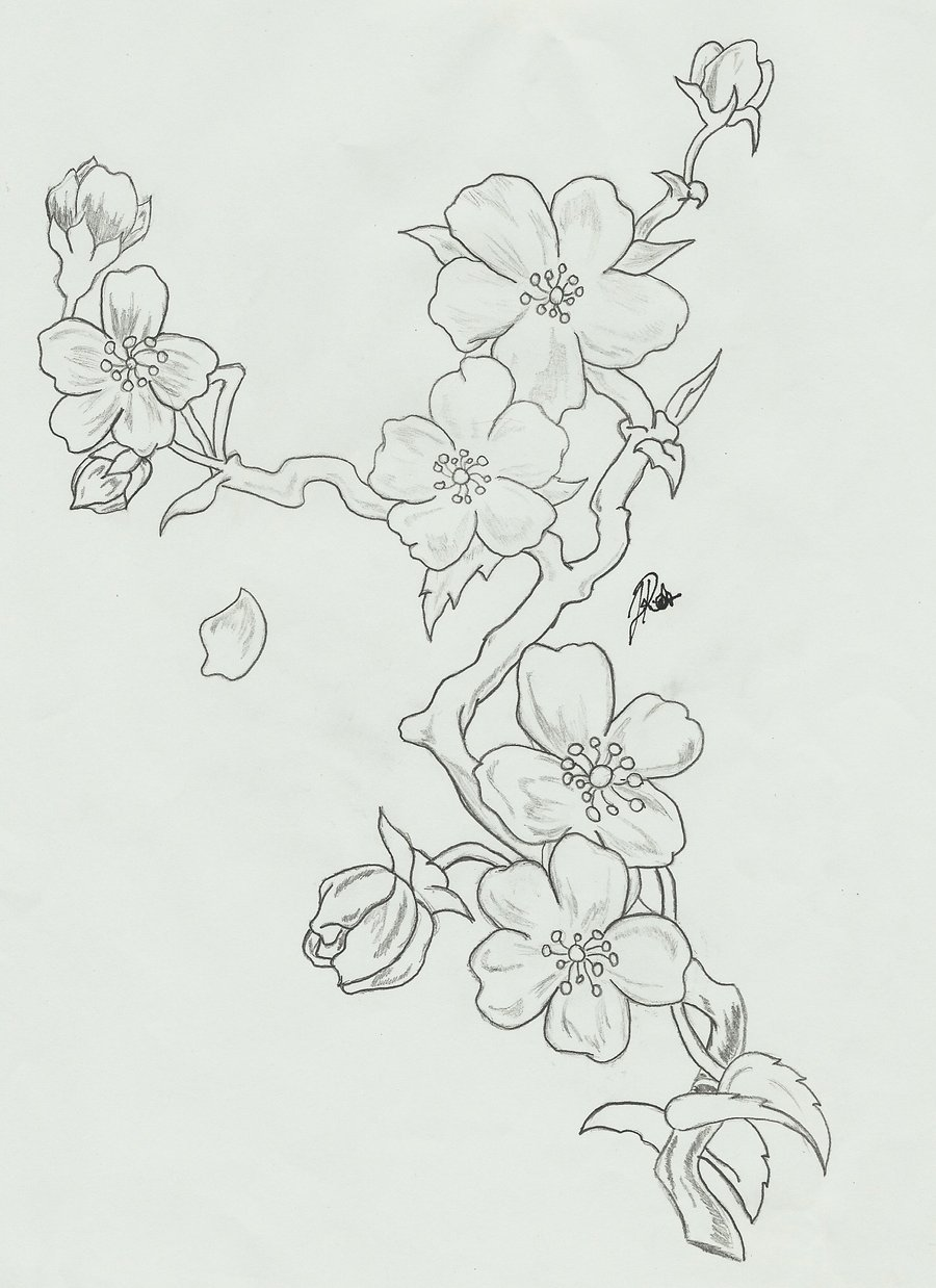 Drawn sakura blossom sketch More!  Explore Cherry Blossom
