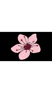 Drawn sakura blossom small flower Easy Blossom Step Blossom How