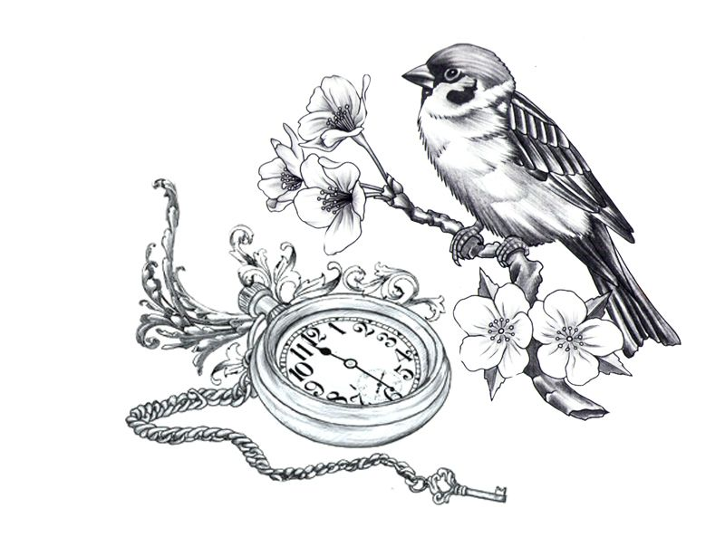 Drawn sakura blossom sparrows On  Bird cherry blossom